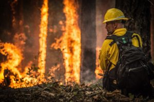 Wildfire and utility experts request government support in wildfire prevention